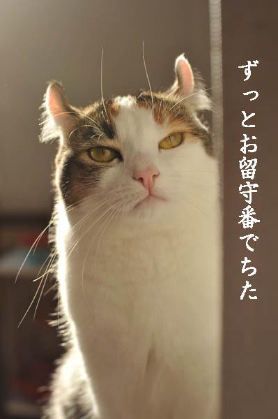b0141397_11302187.jpg