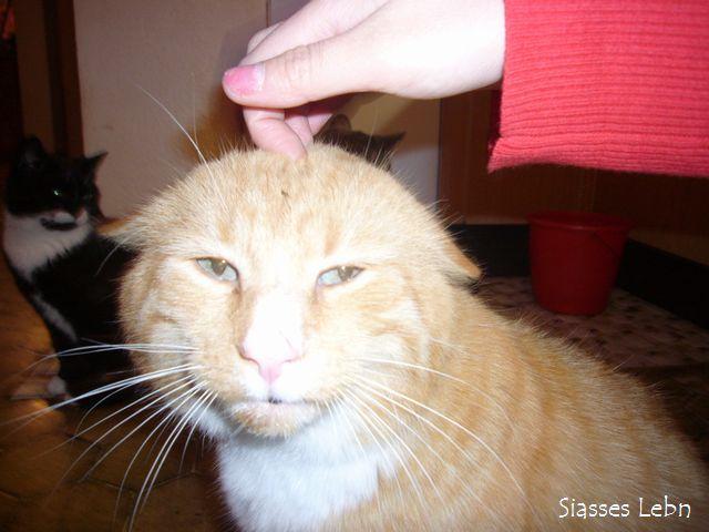 【どうぶつ】 「ネコノミクス」子猫、空前ブームで高騰 希少種は100万円超も [21日記事] 平均価格が3年間で6割上がった [無断転載禁止]©2ch.netYouTube動画>6本 ->画像>52枚