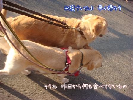 えっちゃん2日目はお祭りさわぎ_f0064906_1964516.jpg