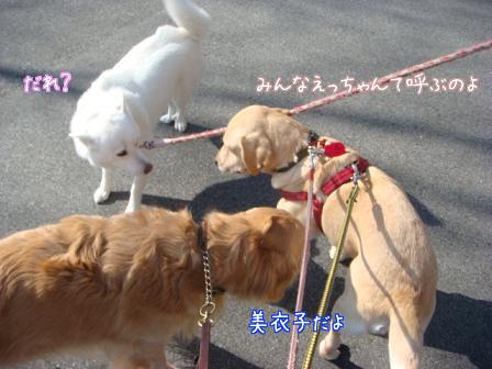 えっちゃん2日目はお祭りさわぎ_f0064906_1983524.jpg