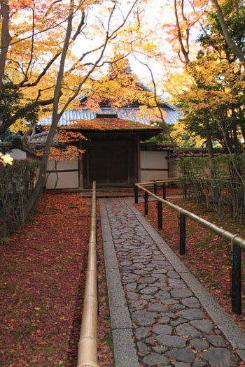 紅葉の大徳寺 高桐院_e0048413_227048.jpg