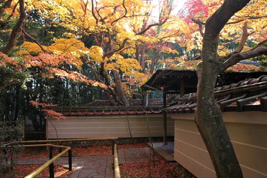 紅葉の大徳寺 高桐院_e0048413_2271343.jpg