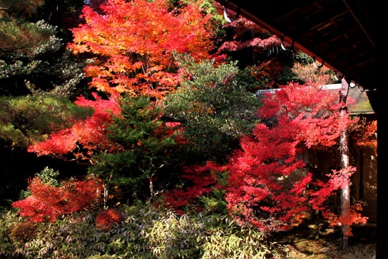 紅葉の大徳寺 高桐院_e0048413_227388.jpg
