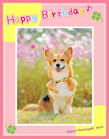 佳凛ちゃん、お誕生日おめでとう♪_d0102523_8423833.jpg