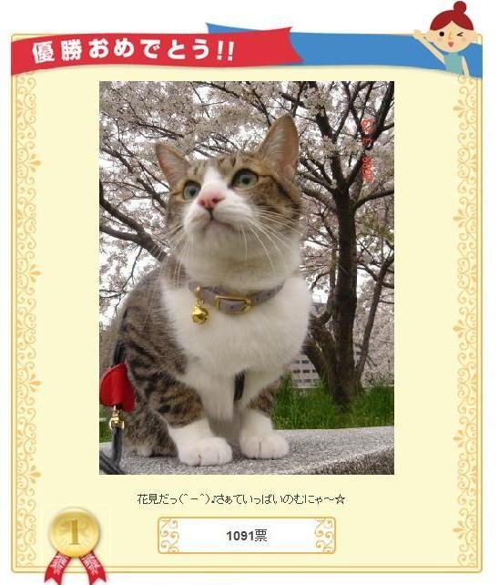 イケにゃん猫 ぽー編。_a0143140_1895384.jpg