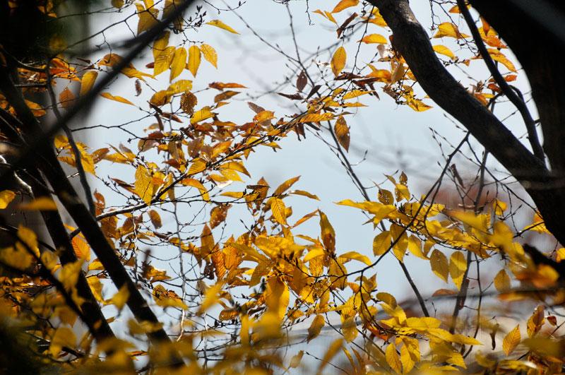 枯れ葉追い 鳥とあそびて _a0031363_12251632.jpg