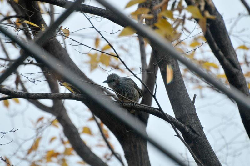 枯れ葉追い 鳥とあそびて _a0031363_12253947.jpg