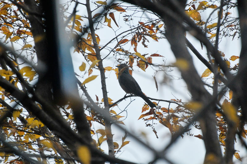 枯れ葉追い 鳥とあそびて _a0031363_1226108.jpg