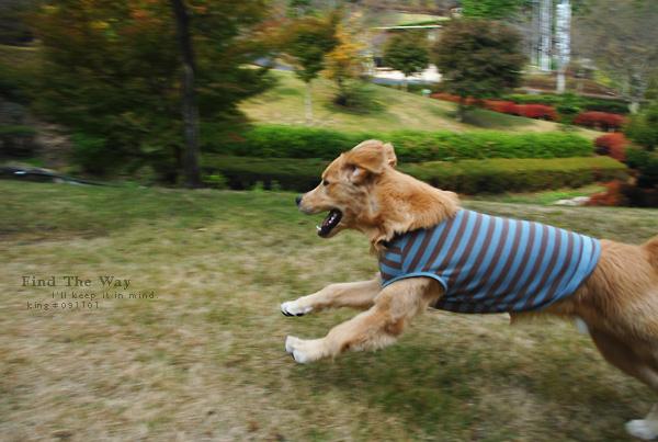 【犬的散歩日和】岐阜・御嵩(みたけ) 〜 みたけの森 1/2_f0054594_348811.jpg