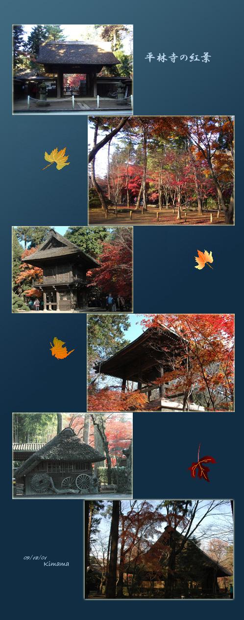 平林寺の紅葉_c0051105_17194065.jpg