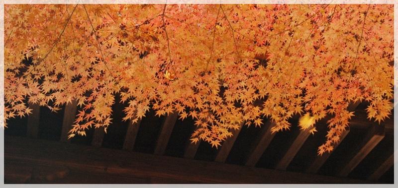 平林寺の紅葉_c0051105_17445227.jpg