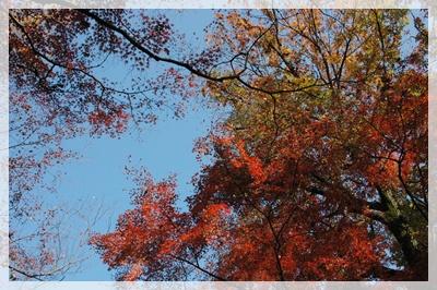 平林寺の紅葉_c0051105_2140167.jpg