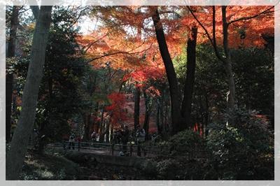 平林寺の紅葉_c0051105_21411010.jpg