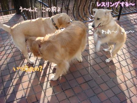 えっちゃん2日目はお祭りさわぎ(後編)_f0064906_1943748.jpg