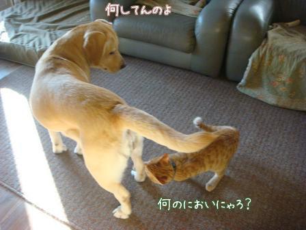 えっちゃん2日目はお祭りさわぎ(後編)_f0064906_2015184.jpg