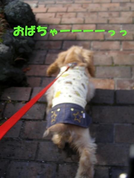 b0067012_14291337.jpg