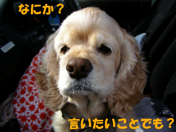 b0067012_14352151.jpg