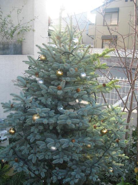 クリスマス★_c0200330_771071.jpg