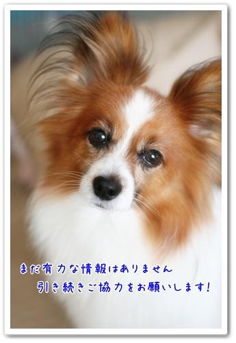 d0013149_7372734.jpg