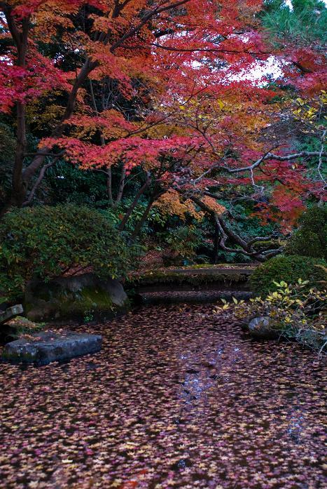 西村家庭園_f0102363_22471381.jpg