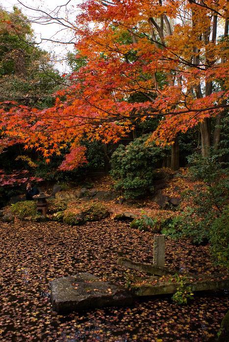 西村家庭園_f0102363_22472230.jpg