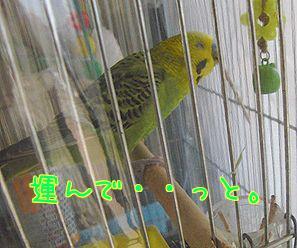 f0196665_0394894.jpg