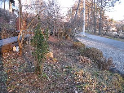わが庭の冬らしさ_a0129867_2121834.jpg