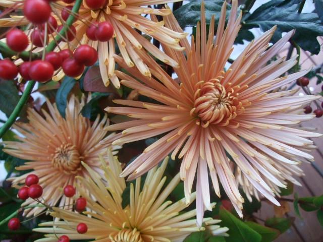 オークリーフ(まことやさん独立お祝いの花)_f0049672_1612659.jpg