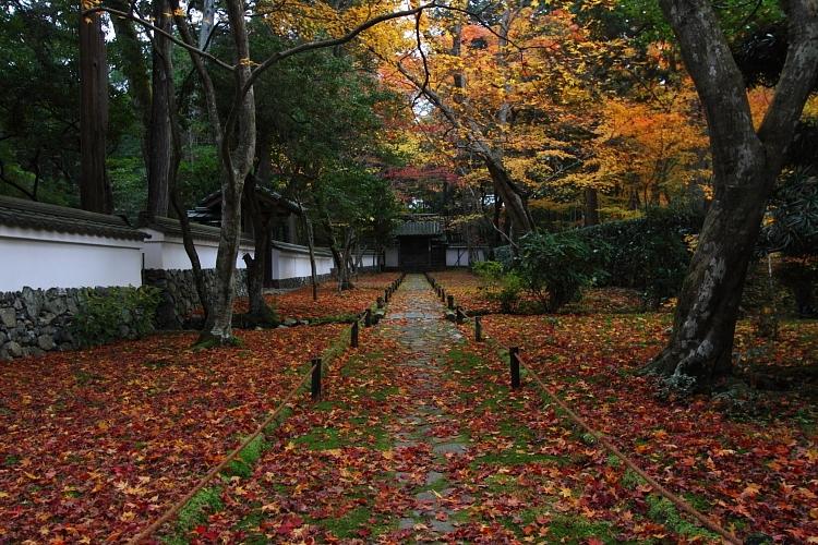 苔寺(西芳寺)_e0051888_15122634.jpg
