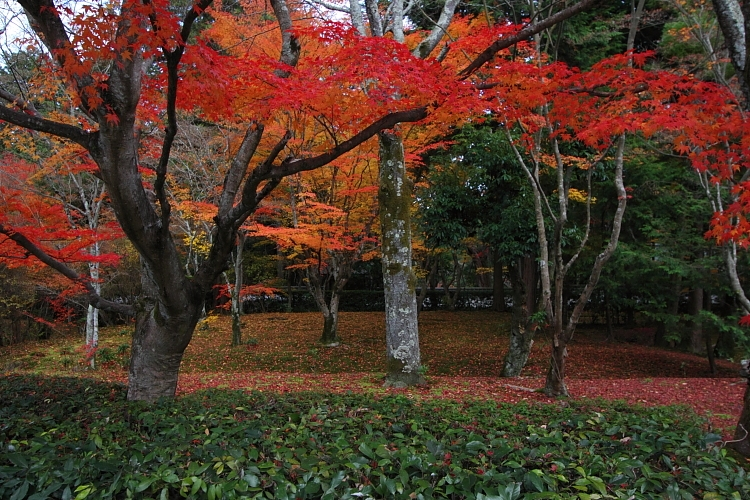 苔寺(西芳寺)_e0051888_1581546.jpg