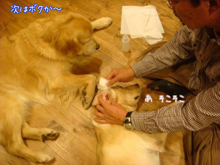 歯磨きと耳掃除_f0064906_184826100.jpg
