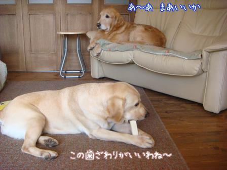 歯磨きと耳掃除_f0064906_18521961.jpg