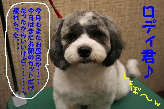 b0130018_1583298.jpg