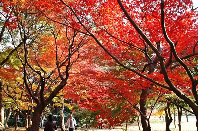 新宿御苑 2009年の紅葉 _f0012718_7135464.jpg