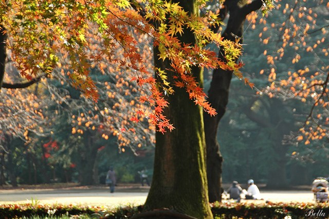 新宿御苑 2009年の紅葉 _f0012718_7164324.jpg