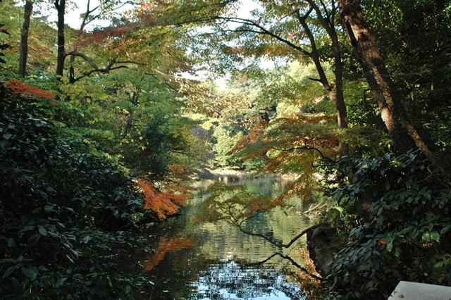 新宿御苑 2009年の紅葉 _f0012718_7293037.jpg