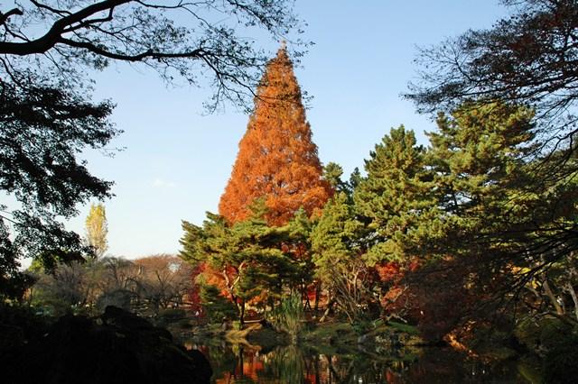 新宿御苑 2009年の紅葉 _f0012718_7315561.jpg