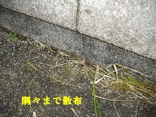 f0031037_1904599.jpg