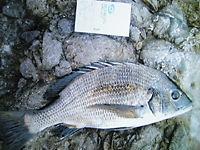 魚釣り_c0217450_18372642.jpg