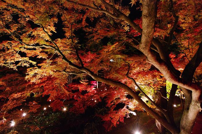 2009紅葉 Ⅸ 北野天満宮ライトアップ_f0152550_21324841.jpg