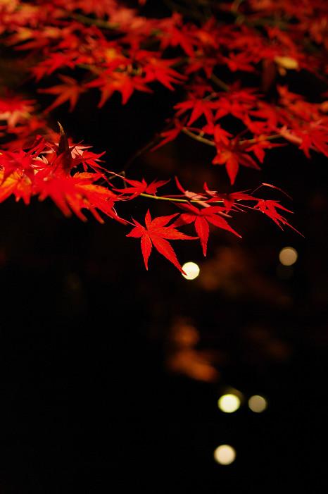 2009紅葉 Ⅸ 北野天満宮ライトアップ_f0152550_21325829.jpg