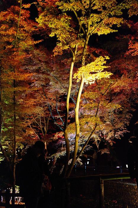 2009紅葉 Ⅸ 北野天満宮ライトアップ_f0152550_21331488.jpg