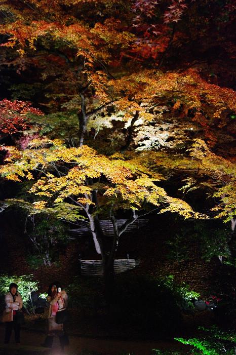 2009紅葉 Ⅸ 北野天満宮ライトアップ_f0152550_21333996.jpg