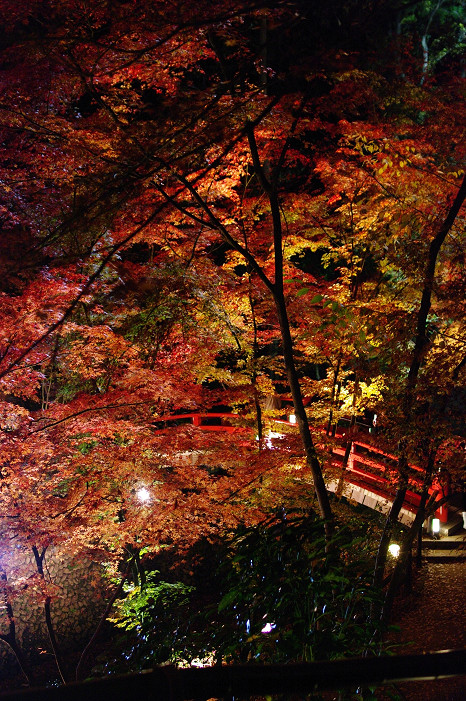 2009紅葉 Ⅸ 北野天満宮ライトアップ_f0152550_2133822.jpg