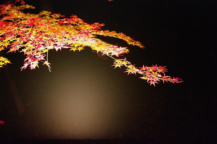2009紅葉 Ⅸ 北野天満宮ライトアップ_f0152550_213427.jpg