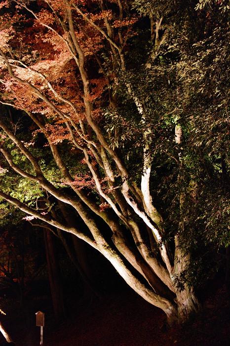 2009紅葉 Ⅸ 北野天満宮ライトアップ_f0152550_21342768.jpg