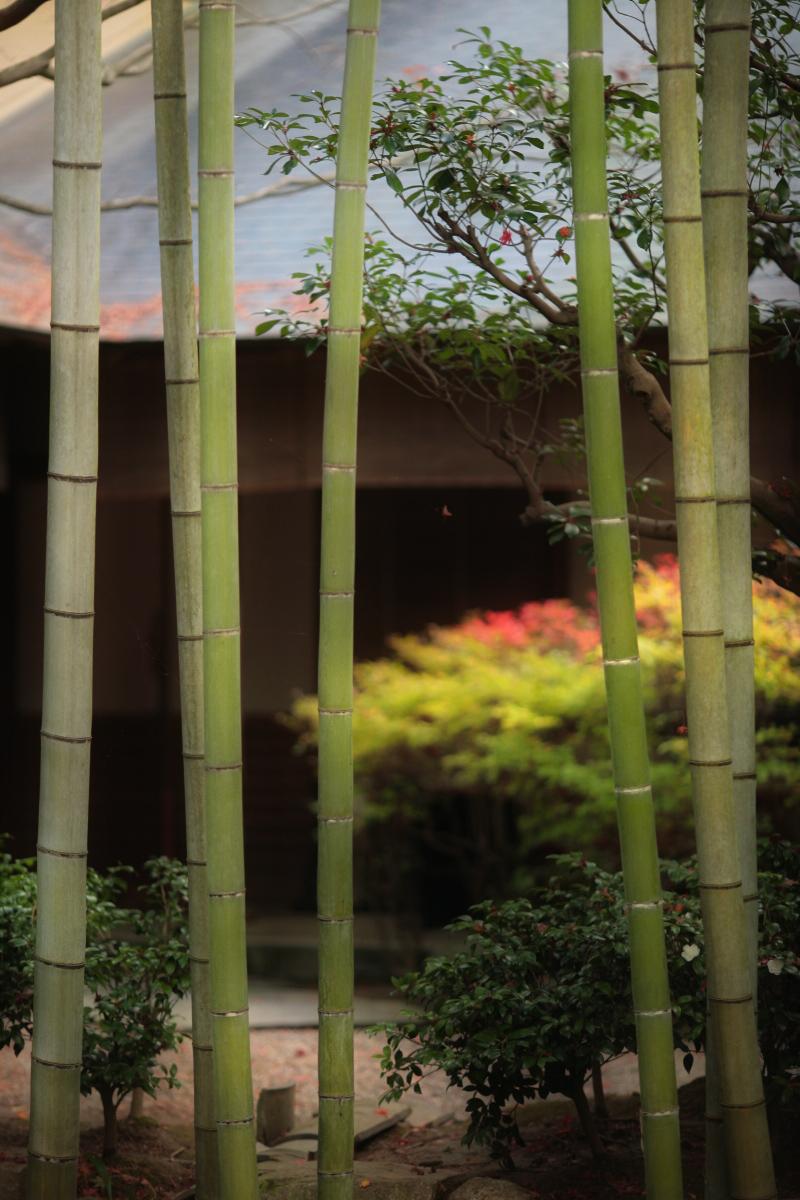 京都スナップ  1_f0021869_12354250.jpg