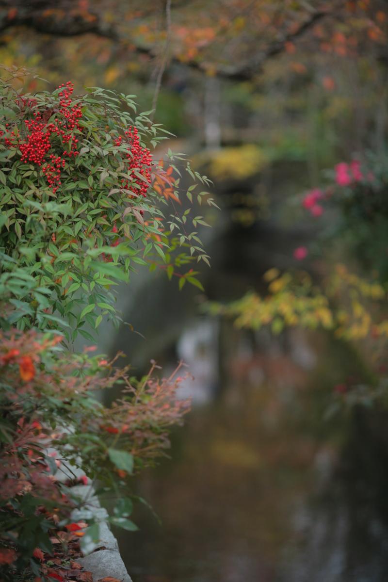 京都スナップ  1_f0021869_12385337.jpg