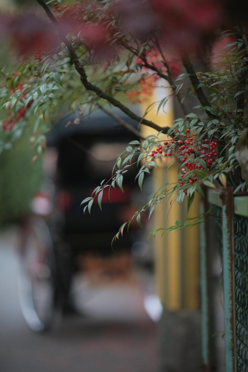 京都スナップ  1_f0021869_1241191.jpg