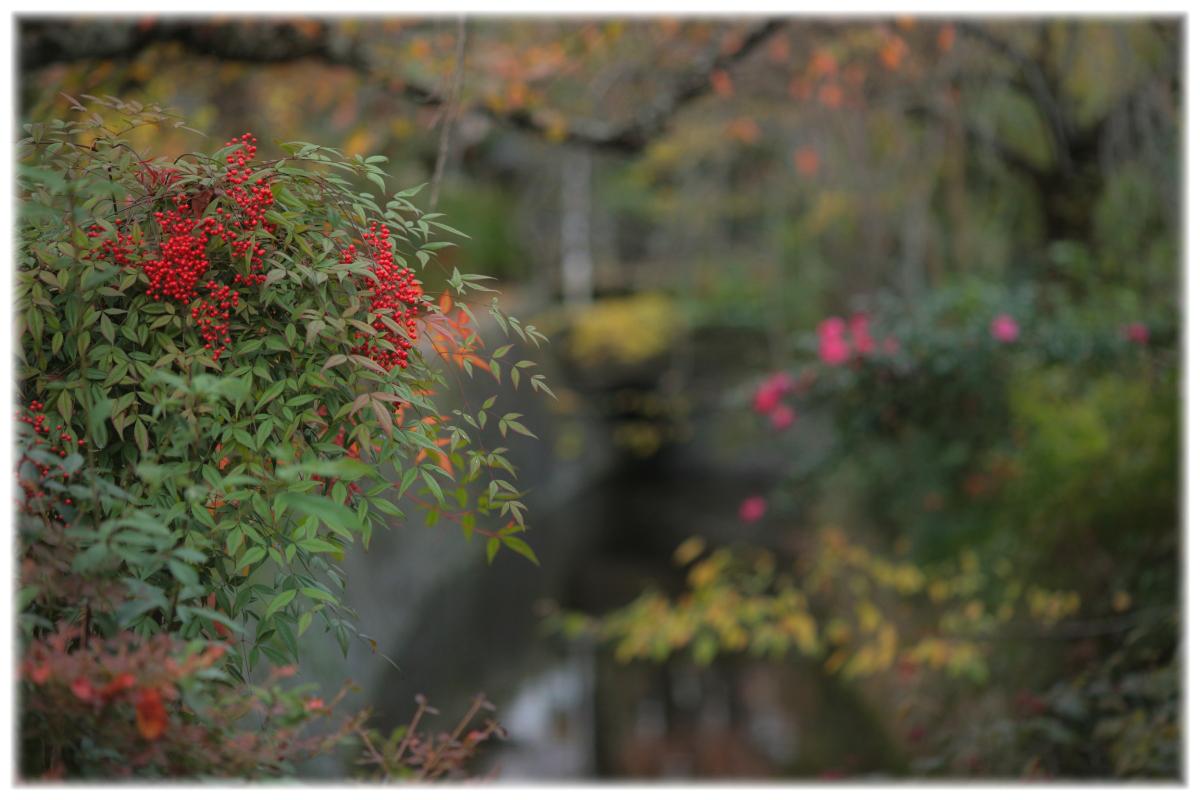 京都スナップ  1_f0021869_12515954.jpg